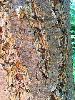 Log, Tree Bark, Close, Colorful, Structure, Pattern