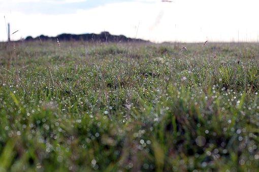 Meadow, Green, Morgentau, Nature, Flowers, Grass, Drip