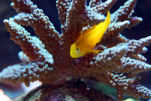 Coral, Reef, Sea, Underwater, Marine, Ocean, Exotic