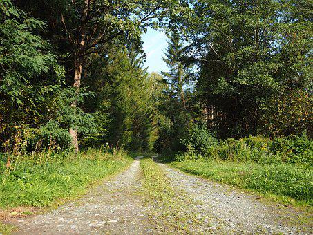 Away, Rest, Forest, Nature, Landscape, Trees, Green
