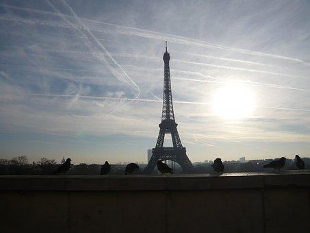 Paris, Eiffel Tower, Walk, Pigeons, Sunrise, Morning