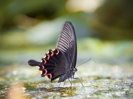 Butterfly, Macro, Beauty, Ppt Backgrounds, Wetlands