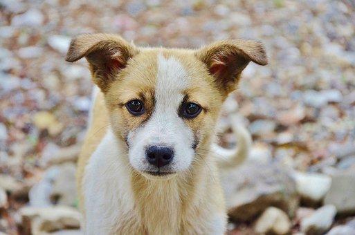 Dog, Animal, Cute, Puppy, Mammal, Doggy, Head, Face