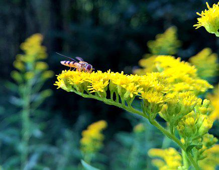 Forest, Bee, Wasp, Nature, Close, Flower, Blossom