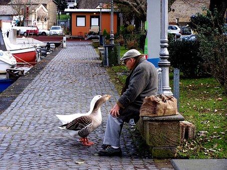 Geese, Dialogue, Couples