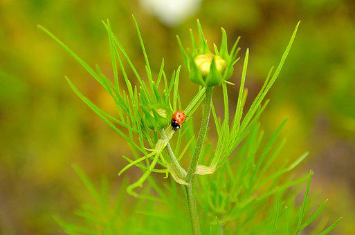 Ladybug, Flower, Nature, Grass