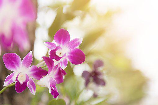 Orchid, Flower, Purple, Floral, Blossom, Decoration