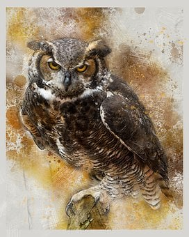 Owl, Bird Of Prey, Night Bird, Nature, Plumage