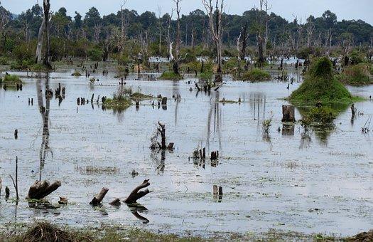 Swamp, Pond, Angkor, Cambodia, Aquatic Plants, Water