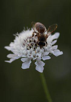 Bee, Flower, Insecta, Pollination, Spring, Plant