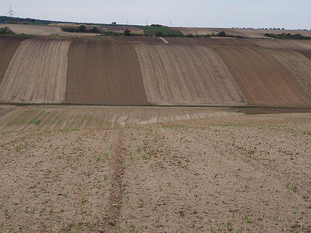 Field, Agriculture, Movement, Nature, Cereals