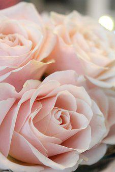 Flower, Rose, Nature, Blossom, Bloom, Love, Wedding