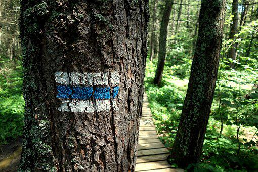 Trail, Forest, Route, Footer, Hiking Trail, The Path