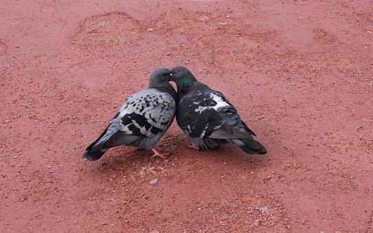 Birds, Dove, Feathered Race, Golubka, Wings, Love