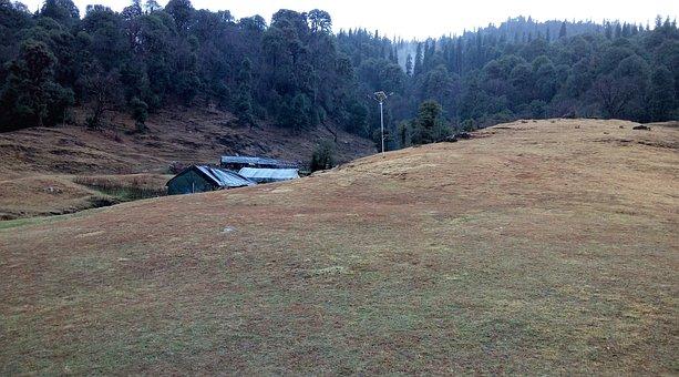India, Himalayan Grassland, Meadow, Dark Forest, Nature