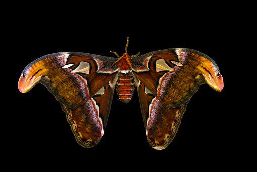 Animal, Butterfly, Insect, Exotic, Wing, Camouflage