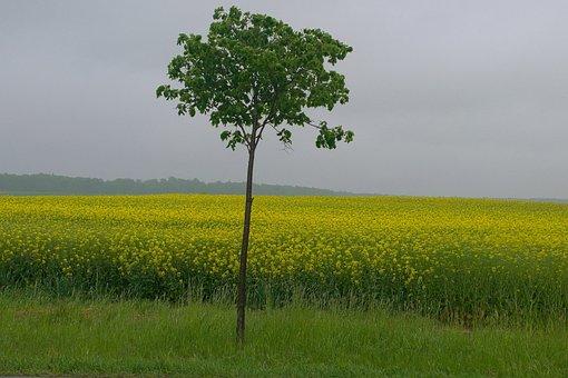 Rapeseed, Landscape, Spring, Beautiful Landscape, Field