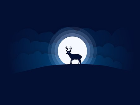 Moon, Deer, Sky, Animal, Silhouette, Night, Wildlife