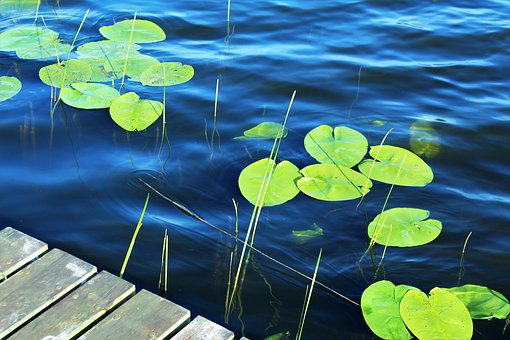 Lake, Water, Surface, Pond, Dock, Nature, Drive, Summer