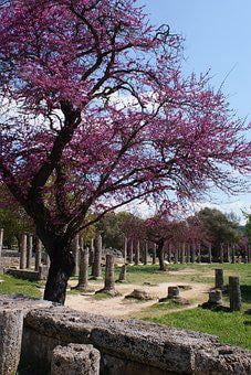 Greece, Olympia, Archeology, Antique, Unesco, Pillars