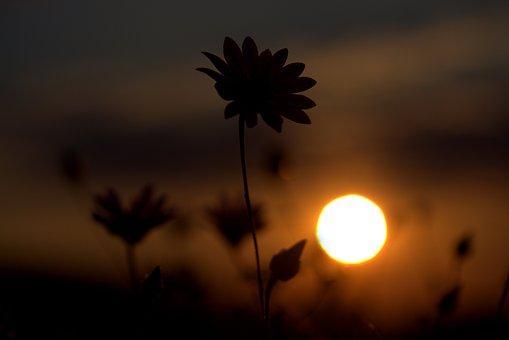 Flower, Shadows, Sunset, Sun, Sky, Cloud
