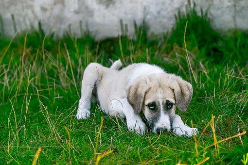Dog, Stray Dog, Baby Animal, Cute Dog, Watchdog, Puppy