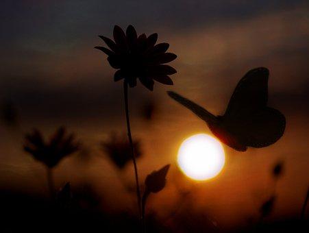 Butterfly, Flower, Shadows, Sunset, Sun, Sky, Cloud