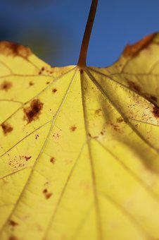 Leaves, Yellow, Autumn, The Leaves Are, Macro, Plant