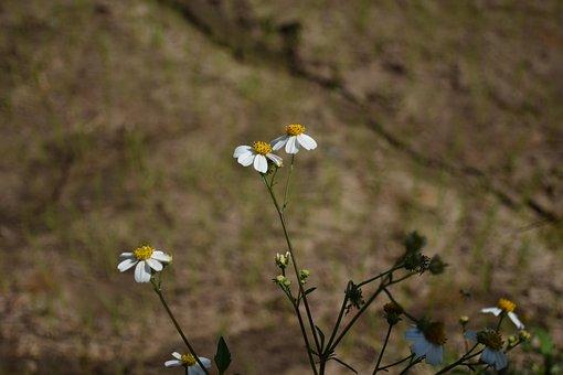 Flowering Grass, Flowers, A Blade Of Grass