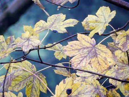 Leaves, Autumn, Tree, Autumn Woods, Foliage, Nature
