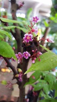 Tiny Flower, Purple, Flower, Nature, Summer, Blooming