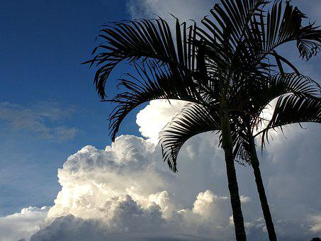 Palm, Climate Change, Clouds, Palm Trees, Climate