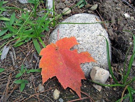 Leaf, Autumn, Rock, Granite, Fall