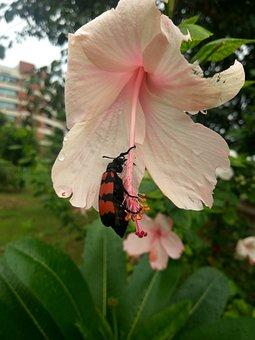 Beetle, Flower, Rainy Day, Nectar