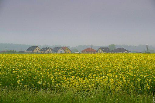 Rapeseed, Field, Nature, Agriculture, Landscape