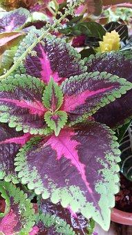 Leaf, Color Leaf, Nature, Color, Natural, Fresh, White