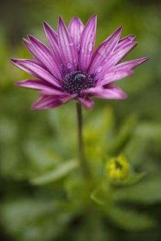 Purple, Green, Flower, Macro, Nature, Plant