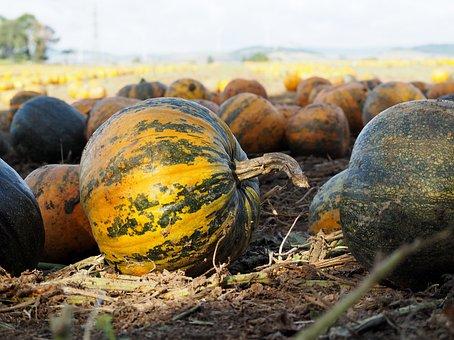 Pumpkin, Pumpkin Box, Pumpkins Autumn, Orange, Autumn