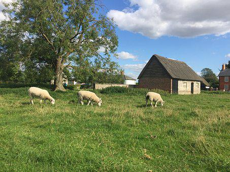 Avebury, Avebury Stones, Sheep, Stone, Wiltshire