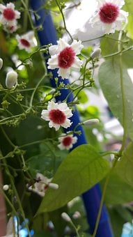 Small Flower, White, Nature, Bloom, Leaf, Green