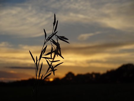 Blade Of Grass, Evening Light, Sunset