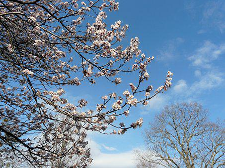 Springtime, Tree, Blossoms, Nature, Pink, Branch, Bloom