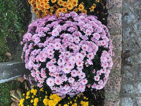 Spring, Purple, Flower, Circle, Lavender, Beautiful