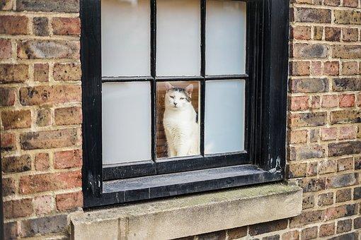 Cat, London, Brick, Windows