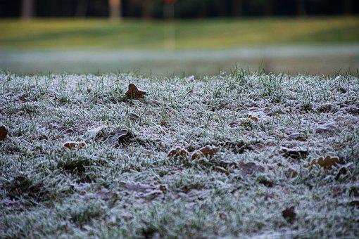 Grass, Nature, Winter, Outside, Frozen, Cold