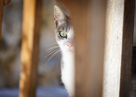 Cat, Kitten, Tabby, Cute, Animal, Pet, White, Feline
