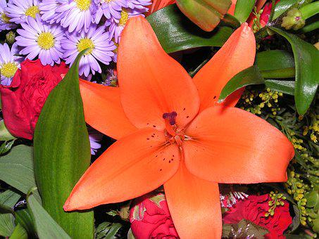 Lily, Flower, Bouquet, Blossom, Blooming, Season, Lilly