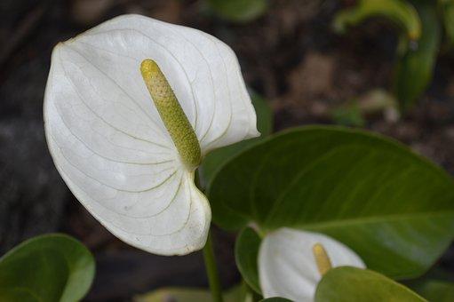 Flower, Nature, Plants, Garden, White, Wild