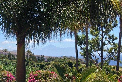 Foliage, Trees, Flowers, Mountain, Volcano, Island