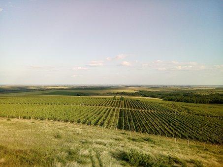 Landscape, Cloud, Summer, Green, Sky, Blue